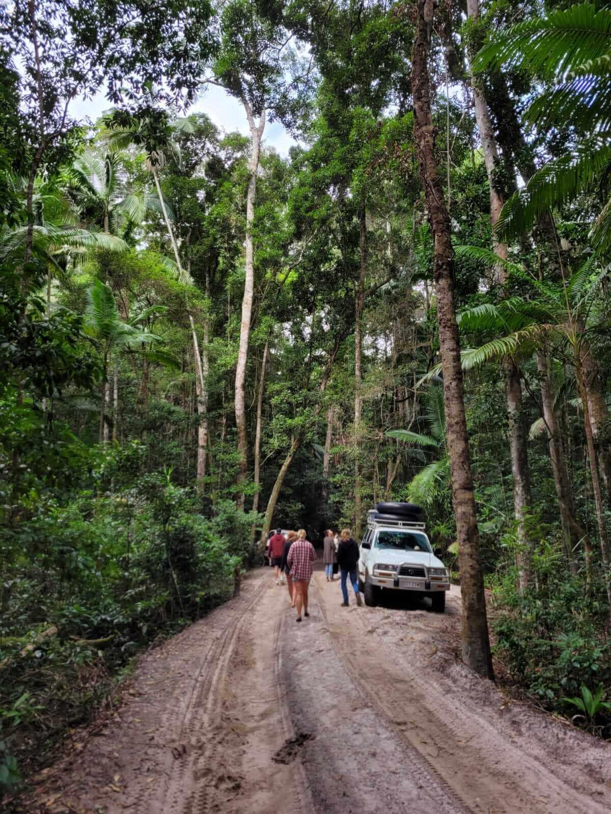 Fraser Jungle - remote road trip